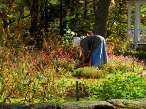 Gardening in an earlier time